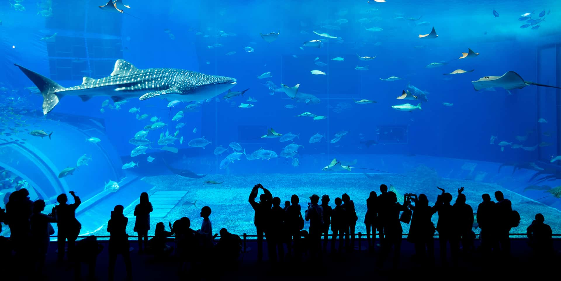 grand requin dubai